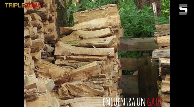 Encuentra una gatos escondido entre todos estos troncos